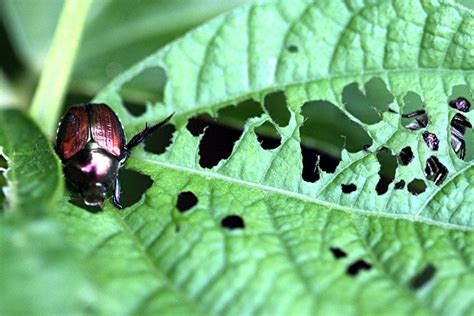 Getting Rid Of The Insects Eating The Roots Of Your Vegetable Garden Bugs Leaves