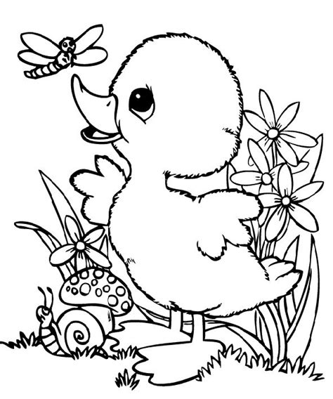 free coloring pages baby ducks baby duck and dragonfly coloring pages faith picture to