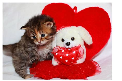 cat valentines cat posters and wallpapers band of cats