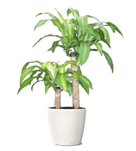 foliage plants indoor indoor planters foliage plants quotes