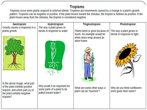 nastic and tropic movement in plants nastic movements in plants images