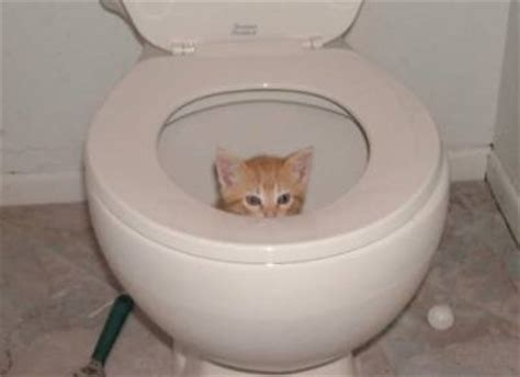 Toxic Smelling Stool by Diarrhea In Cats