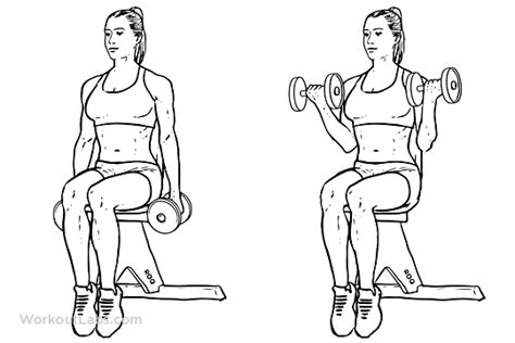 seated dumbbell curl seated dumbbell curl illustrated exercise guide