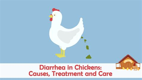 backyard chicken care diarrhea in backyard chickens causes treatment and care
