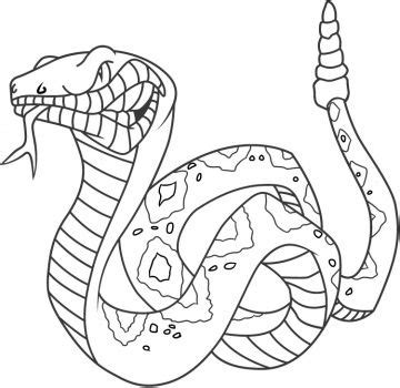 cottonmouth snake coloring page 11 best snakes ewwwwwwwwwww images on pinterest snakes