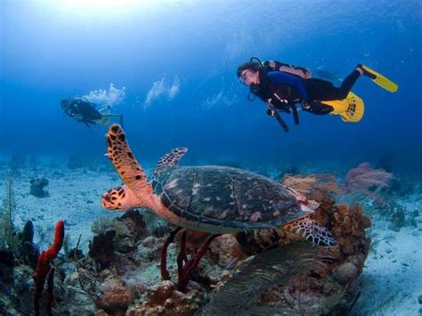 dive vacations 5 awesome destinations for family dive vacations sport diver