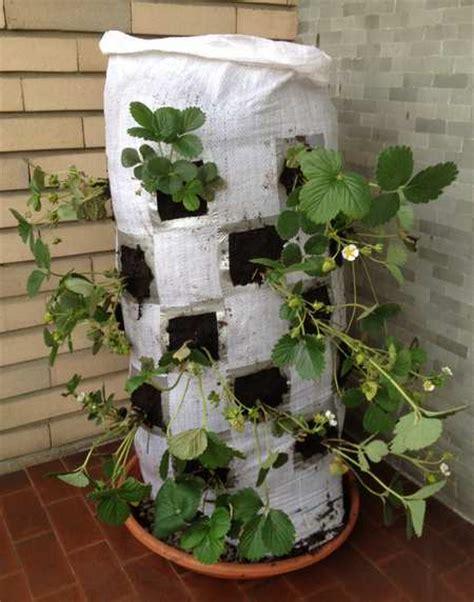 vasi per fragole vendita orto sul balcone le 10 idee pi 249 originali e creative