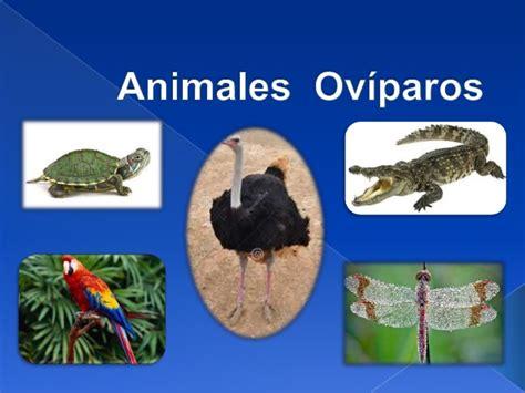imagenes animales oviparos y viviparos animales oviparos