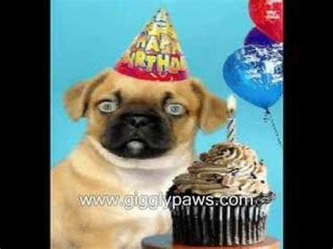 pug singing happy birthday pug sings happy birthday hilariously ecard