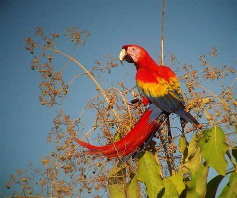 Birds Top what are the top ten birds of costa rica