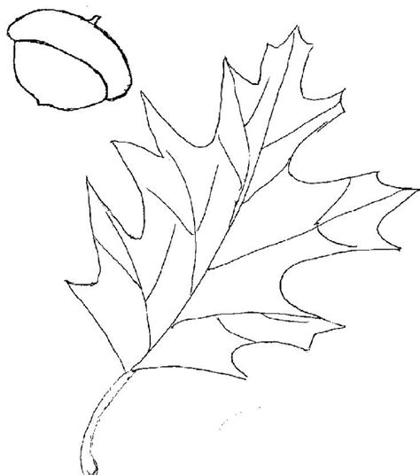 oak leaf template oak leaf template az coloring pages