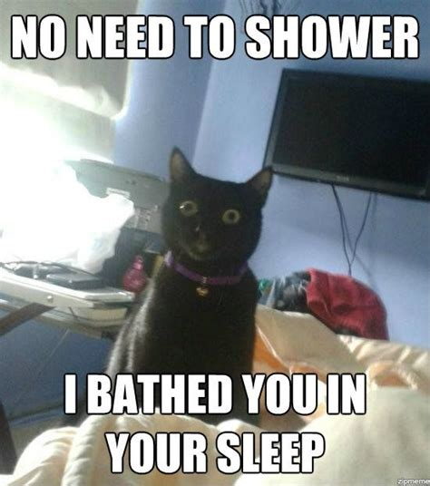 Shower Meme - no need to shower cat meme cat planet cat planet