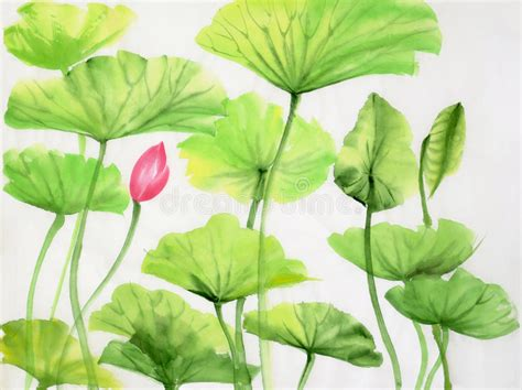 Lotus Leaf Original 30pcs watercolor painting of lotus leaves and flower stock illustration illustration 36826546