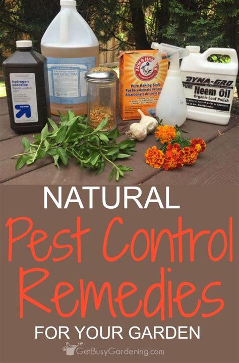 216 Best Organic Pest Control Images On Pinterest Garden Organic Pesticides For Garden Vegetables