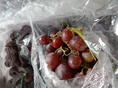Dijamin Jual Bibit Tanaman Anggur Bibit Anggur jual buah anggur merah chille harga murah jakarta oleh pt