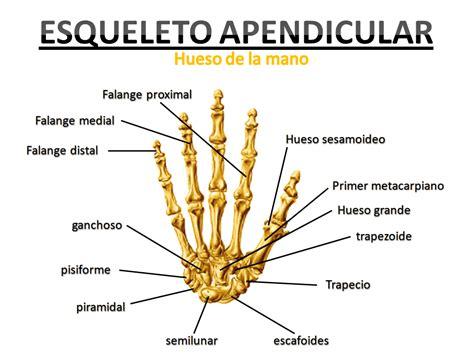 costillas del cuerpo humano huesos de las costillas related keywords huesos de las