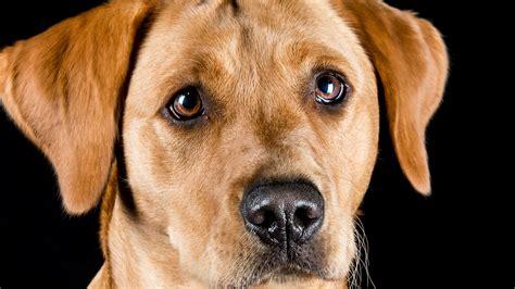 dog photography dog photographer pet photography