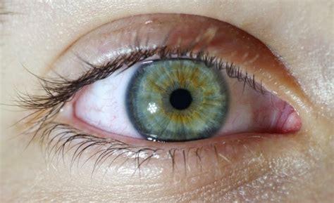 imagenes ojos pardos descargar imagenes muchas de ojos verdes imagui