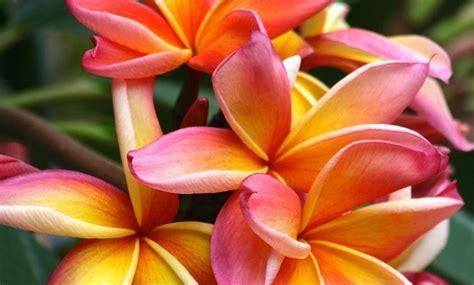 fiori particolari fiori particolari idee green