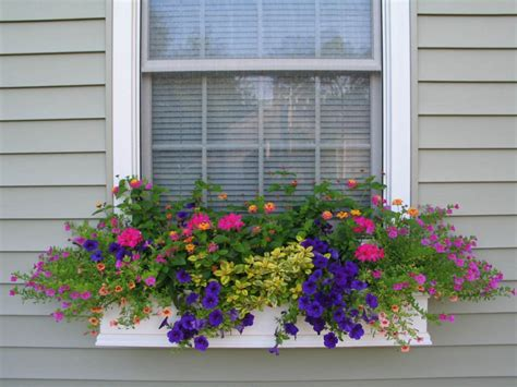 window box flower designs a vintage junket window boxes
