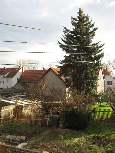 Was Kostet Ein Baum 4662 by Selbstvers Org Thema Anzeigen Kosten F 252 R Das F 228 Llen