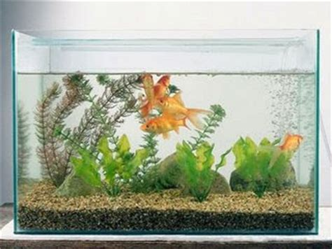 desain aquarium air tawar dekorasi aquarium air tawar