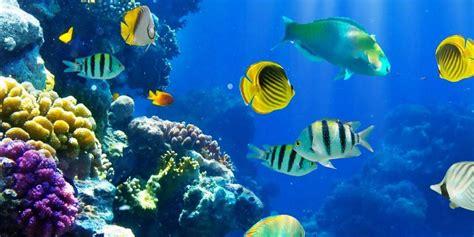 sognare fiori colorati pesci nei sogni sognare pesci significato guida sogni