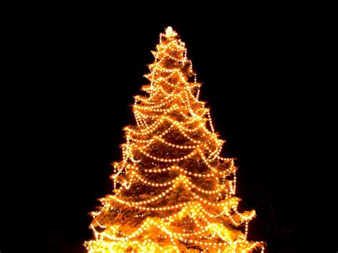sure lit christmas tree lights hang tree lights visihow