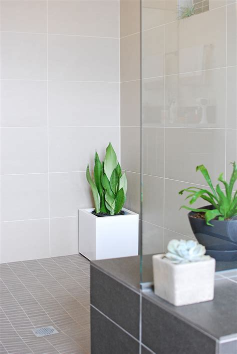 Shower Plants by Bath Shower Plants How To Join The Trend The Garden Glove