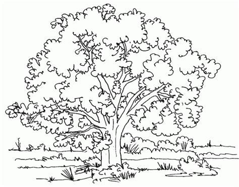 butterfly meadow coloring pages dibujo de 193 rbol para colorear dibujos infantiles de 193 rbol