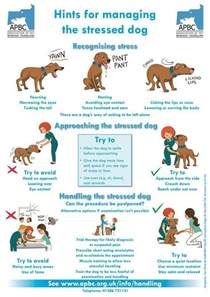 signs of stress in dogs dogs your and signs of stress on