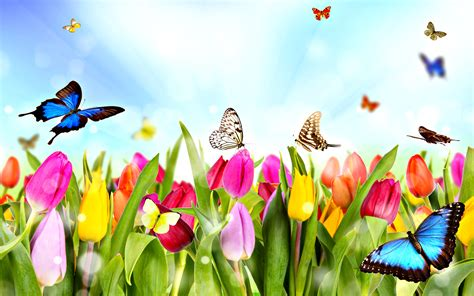 spring butterfly wallpaper hd resolution outdoors