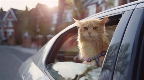 cat that acts like a cat acts like a and so should you says mobile company s ad adweek