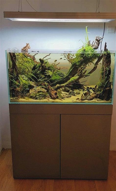 starting  aquascaping  simple   interest