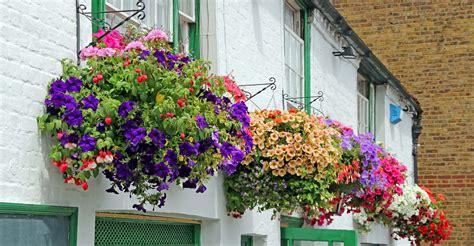 10 hanging basket ideas my garden life
