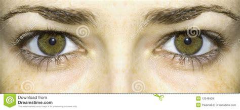 imagenes de ojos verdes claros ojos verdes claros im 225 genes de archivo libres de regal 237 as
