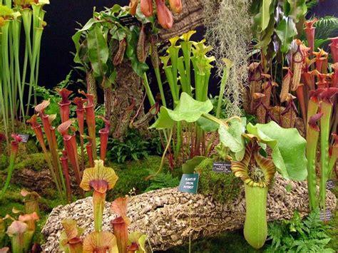 tropical rainforest carnivorous plants tropical plants plant sale presented by the tropical
