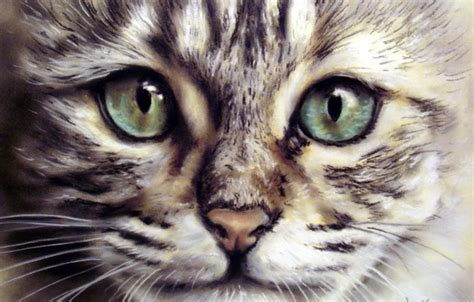 wallpaper painting cat whiskers pet wallpapers painting