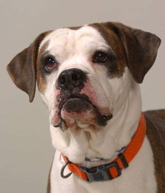 franklin county shelter adoption center columbus oh 1882 best images about don t breed or buy while shelter pets die on