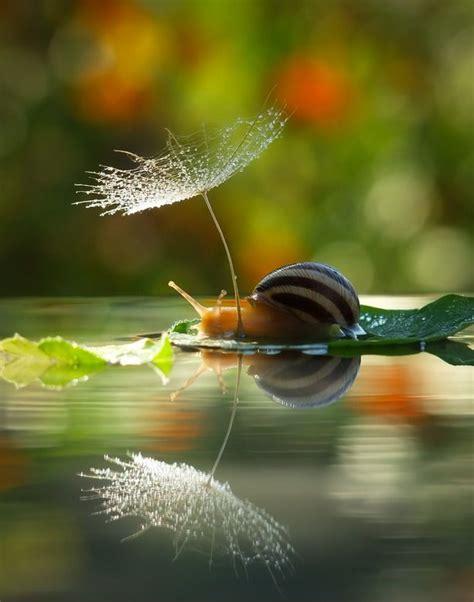 bird snail the adventures of bird snail volume 1 books best 25 snails ideas on snail forest animals
