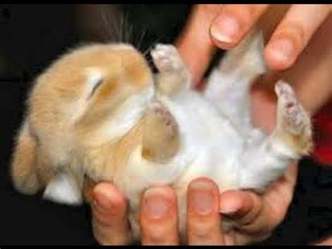 cute little bunnies feeding adorable bunny video youtube