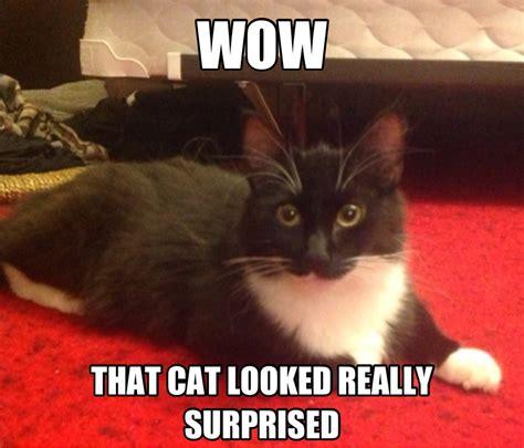 Surprised Cat Meme - my cat saw that surprised cat meme adviceanimals