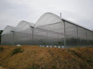 Plastik Rumah Lindungan Hujan Projek Cili Fertigasi Rumah Pelindung Hujan Rph