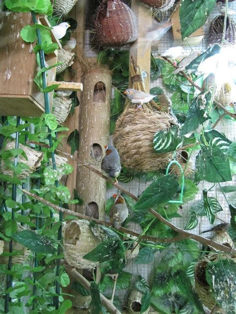 zebra finch housing zebra finches aviary finches pinterest