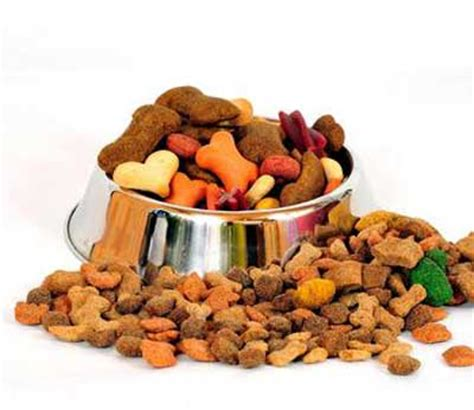 pit food what s for dinner chicago pet sitters