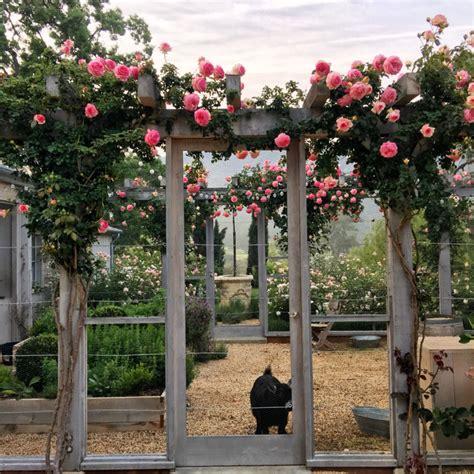 patina garden patina farm roses by the goat garden our house