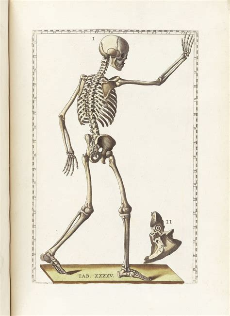 etched in bone a novel of the others books 42 best images about skeletons from the shelves on
