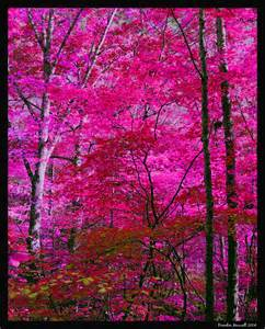 pink trees by pathos1 on deviantart