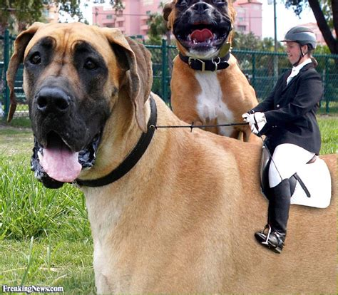 big puppy equestrian a big pictures freaking news