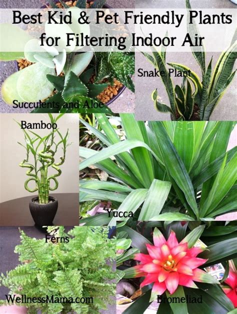 best plants for air quality how to improve indoor air quality naturally best kid